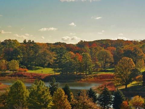 Fall color lights up Round Meadow Lake