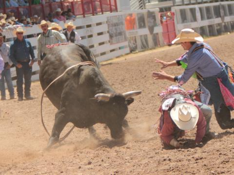 Bull riding action during Cheyenne Frontier Days